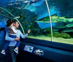 Merlin Entertainments has purchased Istanbul's premier aquarium Turkuazoo from Dutch based Global Aquariums.